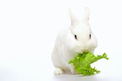 Rabbit on white background Royalty Free Stock Photos