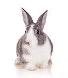 Rabbit on white background Stock Photography
