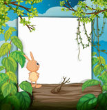 A rabbit and a white board Stock Image