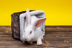 Rabbit in wicker basket Royalty Free Stock Photos