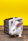 Rabbit in wicker basket Stock Photos