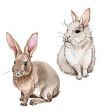 Rabbit wild animal in a watercolor style isolated. Stock Photo