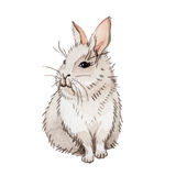 Rabbit wild animal in a watercolor style isolated. Royalty Free Stock Photo