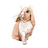 Rabbit wild animal in a watercolor style isolated. Stock Image