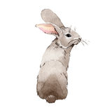 Rabbit wild animal in a watercolor style isolated. Stock Photography