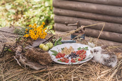Rabbit with wild berries and green apples Royalty Free Stock Images