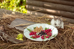 Rabbit with wild berries and green apples Royalty Free Stock Photography