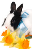 Rabbit With Blue Ribbon And Bouquet Of Yellow Narc Royalty Free Stock Photography