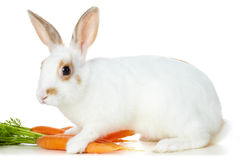Rabbit With Carrots Stock Photography