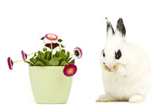 Free Rabbit With Flowers Royalty Free Stock Image - 37572956
