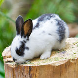 Rabbit on the wood. A rabbit stays on the wood Stock Images