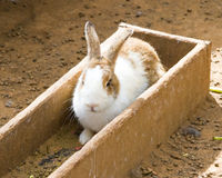 Rabbit in wooden box for feed Royalty Free Stock Images