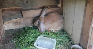 Rabbit in a wooden box video 4k.  stock video