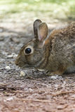 Rabbit in the woods Stock Images