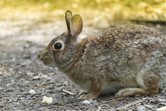 Rabbit in the woods Stock Image