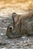 Rabbit in the woods Stock Photo