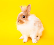 Rabbit on yellow Royalty Free Stock Photos