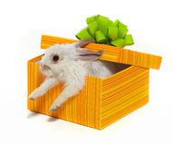 The rabbit in the yellow box Stock Images