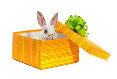 The rabbit in the yellow box Royalty Free Stock Image