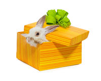 The rabbit in the yellow box Stock Image