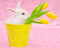 Rabbit and yellow tulips Royalty Free Stock Photography