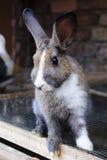 Rabbit03 Royalty Free Stock Photos