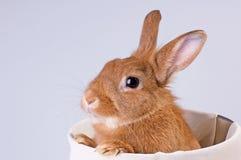 Rabbit2 Stockfoto