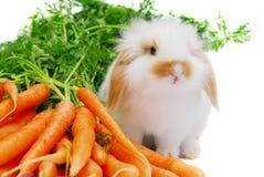 Rabbit3 Lizenzfreie Stockfotografie