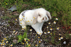 Rabbita 免版税库存图片