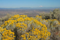 Rabbitbrush and Mount Hood Stock Images