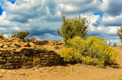 Rabbitbush - Kamin-Felsen-Nationaldenkmal - Colorado Lizenzfreies Stockfoto