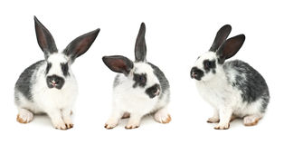 Rabbits. Isolated on white background Royalty Free Stock Photos