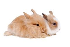 Rabbits Royalty Free Stock Photos