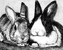 Rabbits. Black and white drawing of two adorable rabbits Royalty Free Stock Image