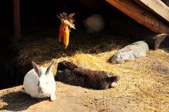 Rabbits. White, gray and black rabbits Royalty Free Stock Image
