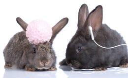 Rabbits Royalty Free Stock Photo
