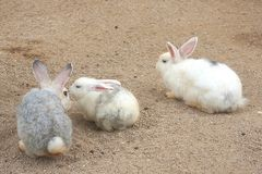 Rabbits. Three grey and white rabbits in the rabbit farm Stock Photos