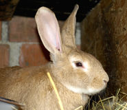 Rabbits on animal farm. In rabbit-hutch Royalty Free Stock Photography