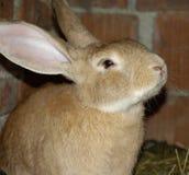 Rabbits on animal farm Stock Photo