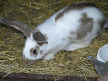 Rabbits on animal farm Royalty Free Stock Photo