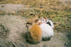 Rabbits. Art design of cute little bunnies in the zoo. Rabbits. Art design of cute little bunnies stock photos