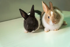 Rabbits. Baby rabbits on animal farm Royalty Free Stock Photo