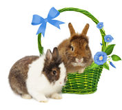 Rabbits in basket with blue flowers and bow Stock Photo