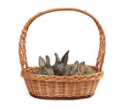 Rabbits in a basket Stock Photos