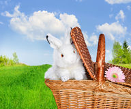 Rabbits in the basket on meadow and flower Royalty Free Stock Photography