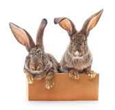 Rabbits in the box. Rabbits in the box on a white background Stock Photos