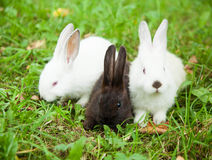 Rabbits bunny cute on the grass royalty free stock photo