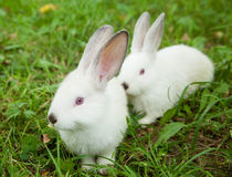 Rabbits bunny cute on the grass Royalty Free Stock Images