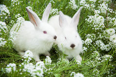 Rabbits bunny cute on the grass Stock Photo