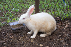 Rabbits bunny in the garden. Rabbits bunny animal Royalty Free Stock Photo